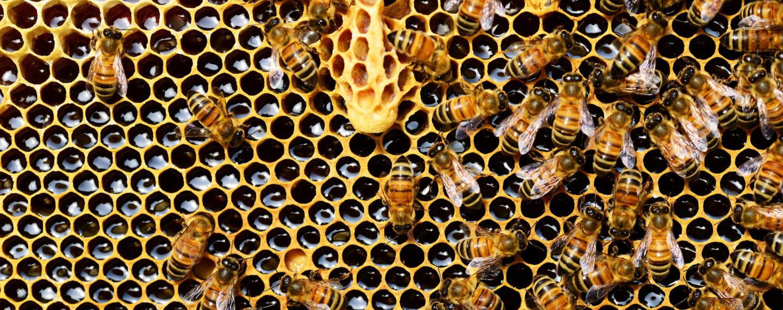 Bienenwachs Tuecher Blog